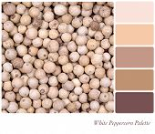 A background of white peppercorn in a colour palette, with complimentary colour swatches.