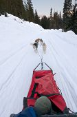Dog Sledding From Driver's Perspective