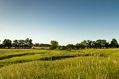 stock photo of kansas  - green Kansas pasture - JPG