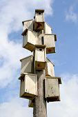 Birds Sky Scraper