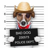stock photo of delinquency  - mugshot of a mexican very bad dog - JPG