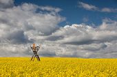 Hunting Tower On The Rape Field