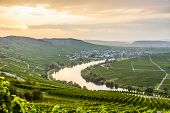 pic of moselle  - famous Moselle Sinuosity in Trittenheim in afternoon sun - JPG