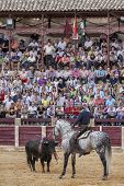 Spanish bullfighter Fermin Bohorquez bullfighting in front of the brave bull with its horse the publ