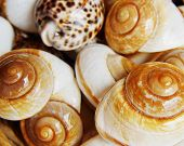 sea �?�¢??�?�¢??shell as a background