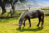 stock photo of horses eating  - Horse on pasture in evening glow - JPG