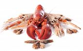 image of norway lobster  - various seafood in front of white background