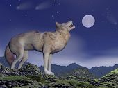 stock photo of wolf moon  - One wolf howling at full moon by deep blue night upon the mountains - JPG