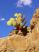 Cactus On Rock