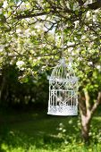 Empty birdcage in apple blossom tree in spring