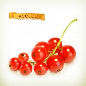Redcurrant berries, vector illustration