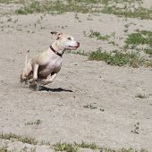 Dog running extreme action