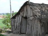 Palm tree fronds hut