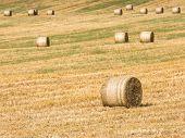 Hay-Roll On Meadow