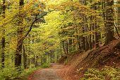 Path through autumnal forest