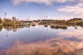 Wetland Near Ravenna, Italy
