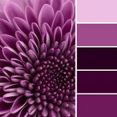 Постер, плакат: Purple Flower And Color Swatches