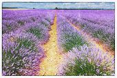 vintage fresco style of the lavender field landscape