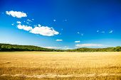 Summer Landscape with Mown Wheat Field and Sky
