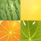 collection of vector fruits textures