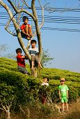 Asian Children, Active Kid, Outdoor Activity