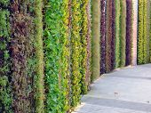 Green / Living Wall