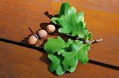 stock photo of acorn  - acorns and oak leaves on a wooden board - JPG