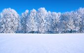 Frosted trees against a blue sky