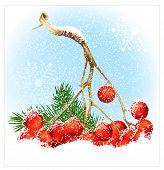 Christmas snow background with rowan. Vector illustration