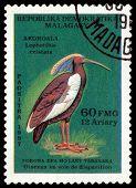 Vintage  Postage Stamp. Bird Lophotibis Eristata.
