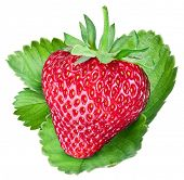 One rich strawberry fruit on green leaf. File contains clipping paths.
