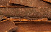 Cinnamomum camphora or Cinnamon bark