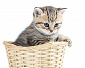 Beautiful gray kitten in basket isolated on white
