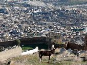 Donkey Before View Of Moroccan City Fes