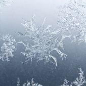 Snowflake Close Up On Window Glass In Winter