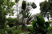 Exuberant Tahiti