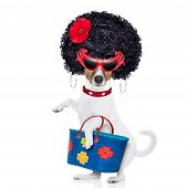 picture of diva  - crazy and silly jack russell dog diva lady with bag shopping at supermarket isolated on white background - JPG