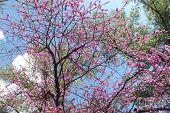 stock photo of dnepropetrovsk  - this tree - JPG