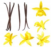 stock photo of bean-pod  - Vanilla pods and flower isolated on white background - JPG