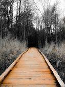 stock photo of board-walk  - Orange painted wooden board walk in woods - JPG