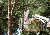 picture of cherry-picker  - professional lumberjack on an elevated work platform who cutting trunks on the top of a big tree - JPG