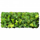stock photo of quadrangles  - Beautiful graphics made with green leaves on a gradient background - JPG