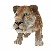 stock photo of saber-toothed  - 3D digital render of a smilodon or a saber toothed cat isolated on white background - JPG