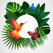 picture of colibri  - Tropical leaves with birds - JPG