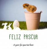 image of pasqua  - feliz pasqua against stuffed chick in pink bucket - JPG