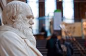 foto of darwin  - Statue of Charles Darwin at the Natural History Museum - JPG