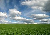 Green Meadow Cloudy Blue Sky Background