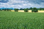 Fields of crops just outside Shrewsbury, Shropshire, UK
