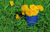 Bouquet Of Dandelions In A Cup On A Green Lawn
