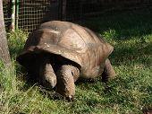Alte Schildkröte